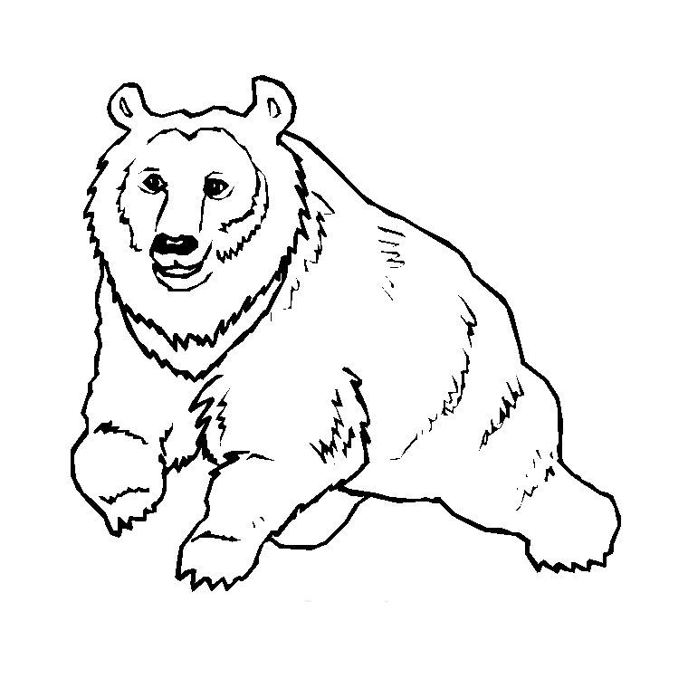 dessin à colorier mandala sanglier