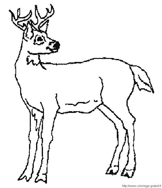 dessin sanglier marcassins