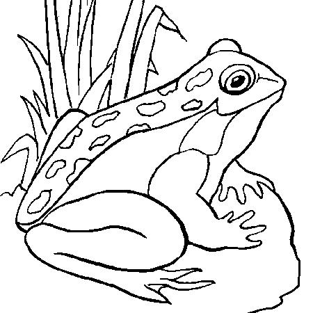 dessin à colorier à imprimer sanglier
