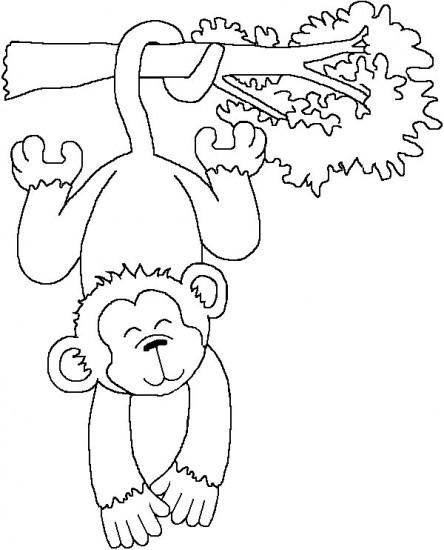 Dessin guenon singe noix - Dessin de singe a colorier ...
