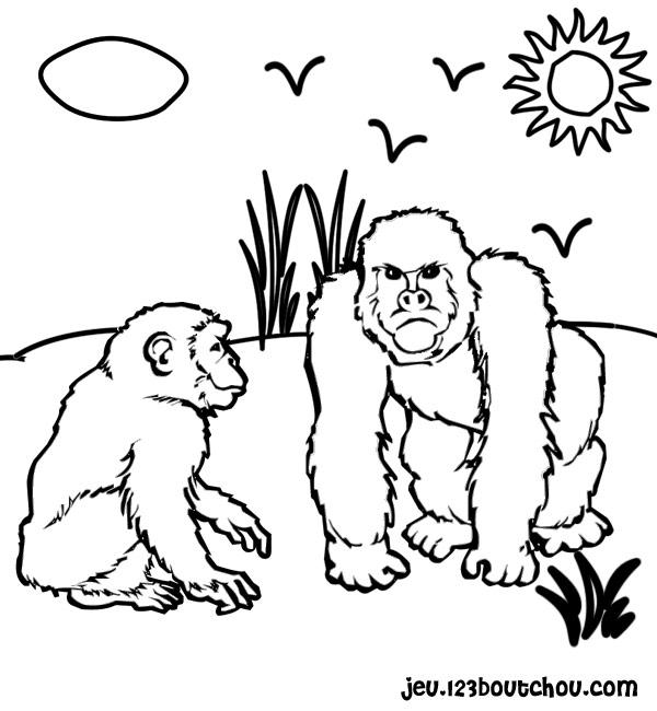 Singe - Dessin de singes ...