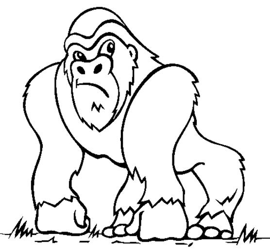 dessin ã colorier d u0027un singe