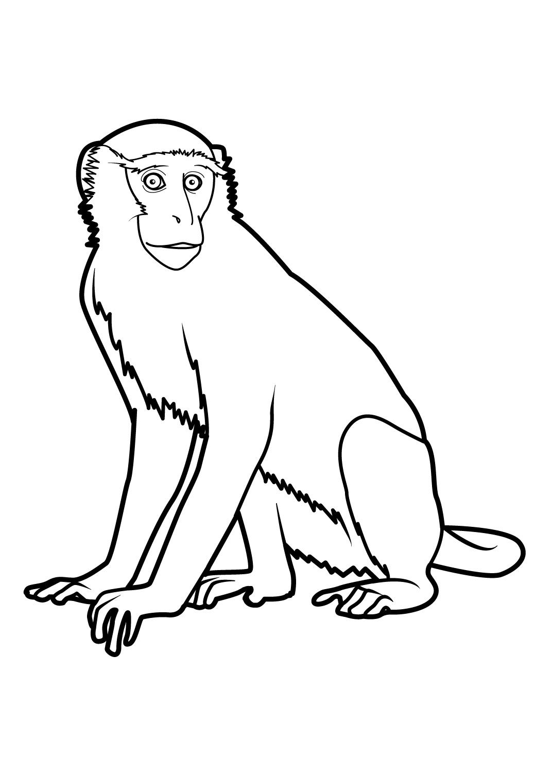 dessin à colorier singe popi
