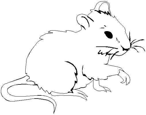 7 dessins de coloriage souris ecole  u00e0 imprimer