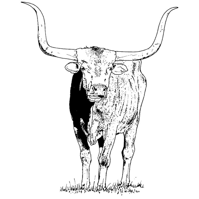coloriage taureau à imprimer