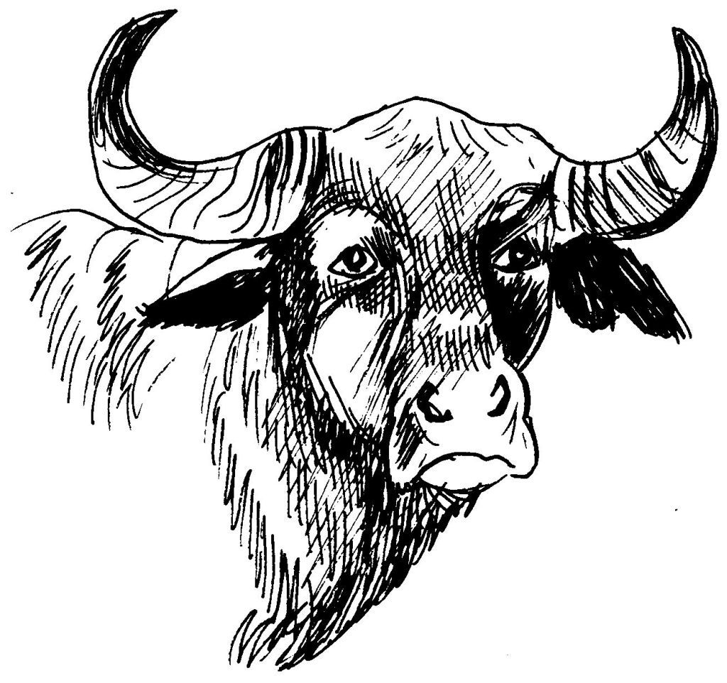 dessin taureau en ligne