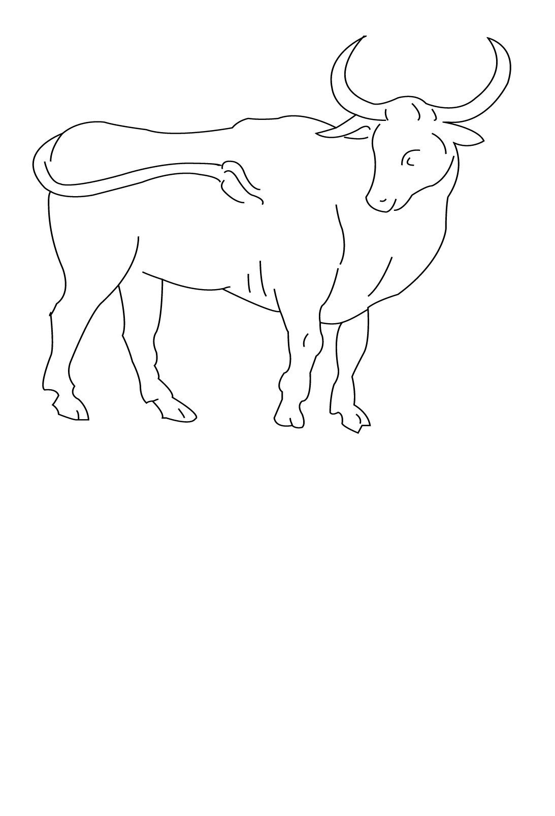 dessin tete de taureau