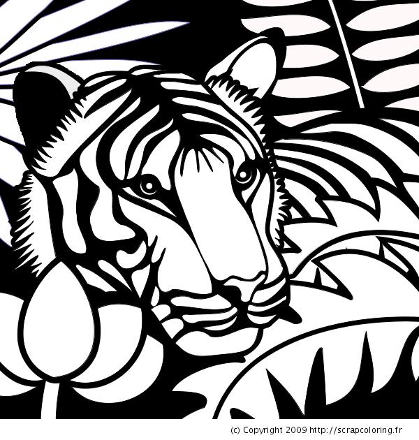 19 dessins de coloriage tigre blanc imprimer - Coloriage tigre ...