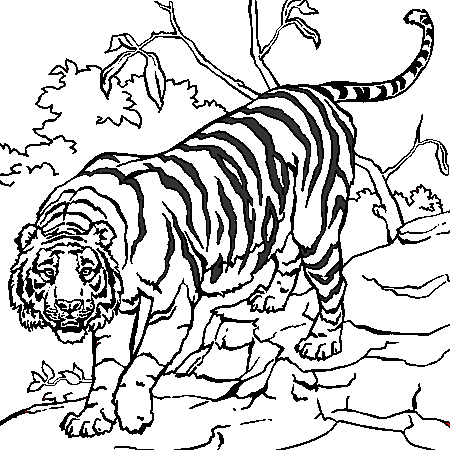 18 dessins de coloriage tigre du bengale imprimer - Photo de tigre a imprimer ...