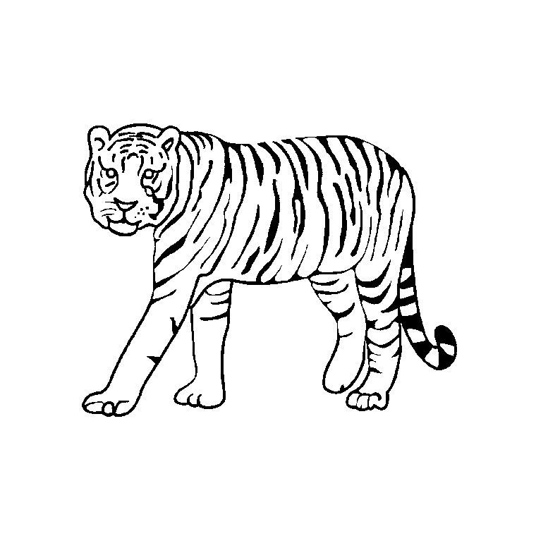 18 dessins de coloriage tigre du bengale imprimer - Tigre blanc dessin ...