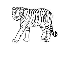 Dessin Simple Tigre