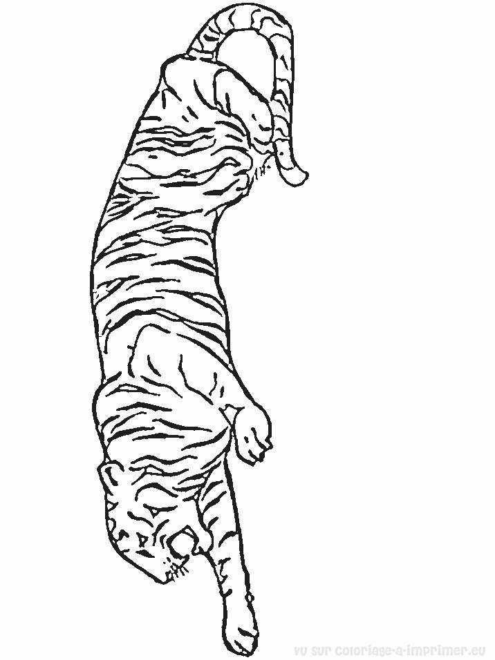 modele dessin tigre