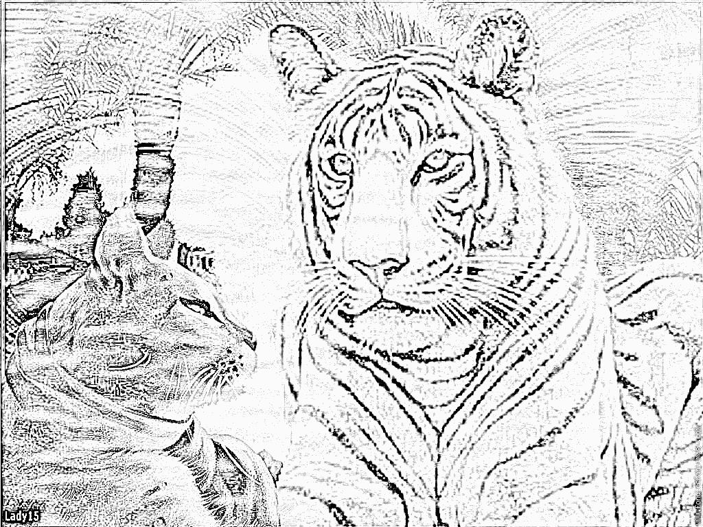 Dessin colorier tigre a dent de sabre - Image dessin tigre ...