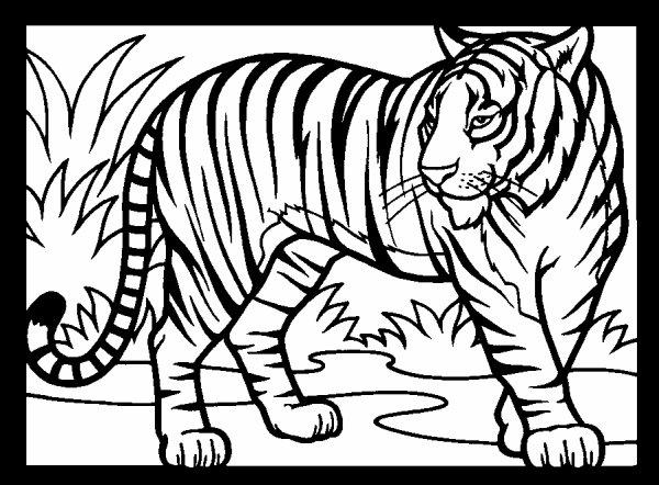 dessin mandala tigre imprimer