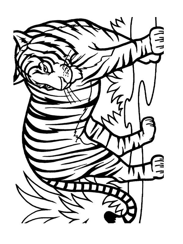 Jeux coloriage dessiner tigre - Coloriage tigre ...