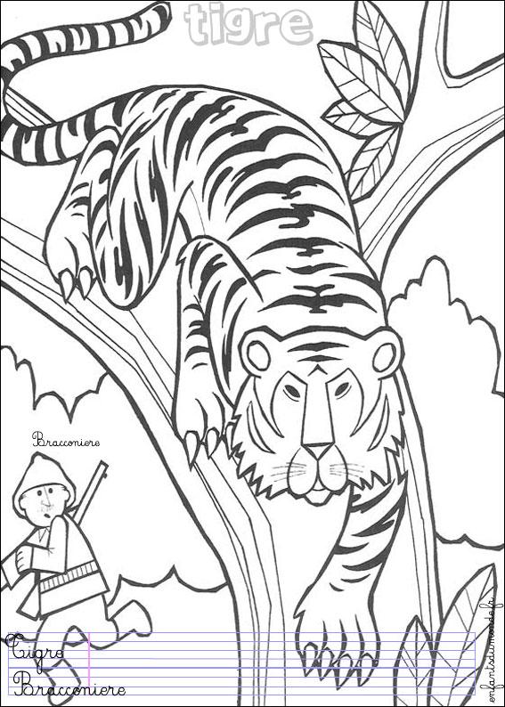 coloriage à dessiner tigre sherkan
