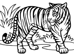 Dessin A Imprimer Tigre