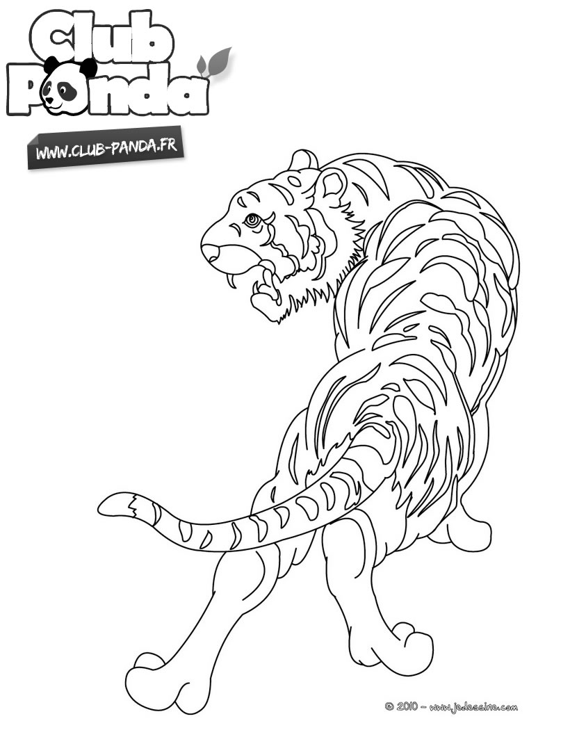 coloriage à dessiner a imprimer tigre a dent de sabre