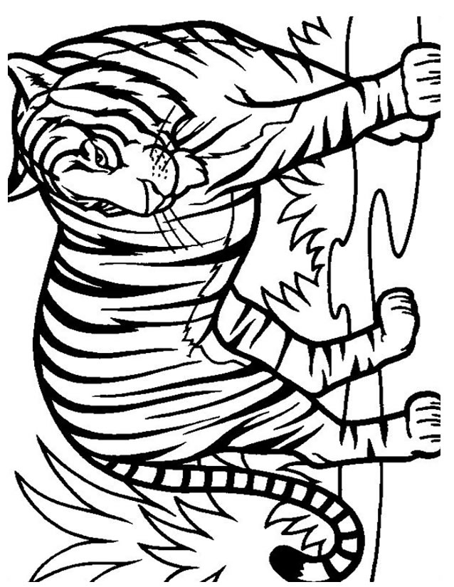 coloriage à dessiner de tigre à colorier