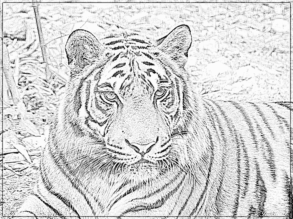 Colorier un tigre en ligne - Image dessin tigre ...