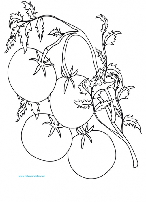 Dessin tomates imprimer - Tomate dessin ...