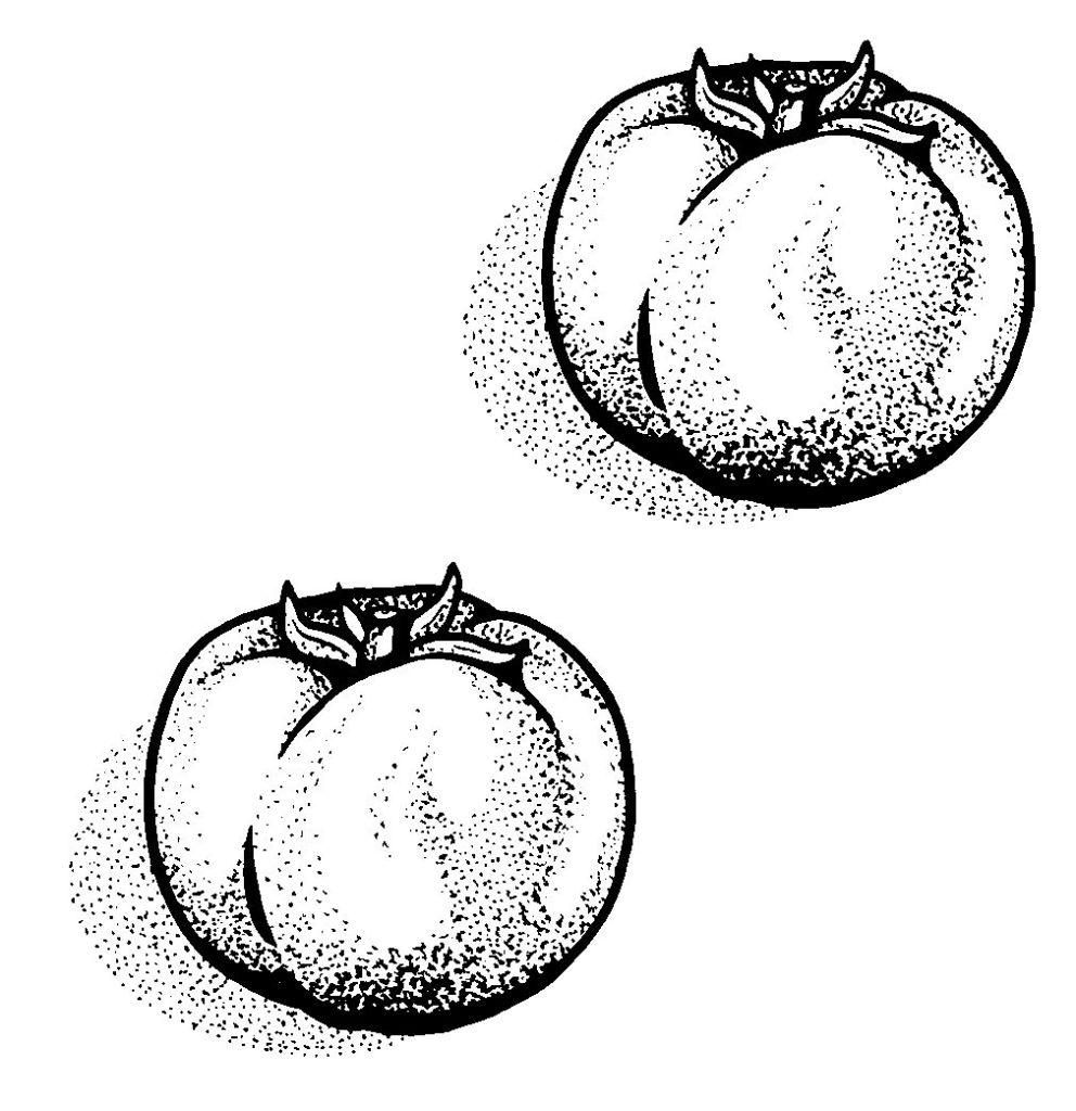 dessin à colorier pied de tomate