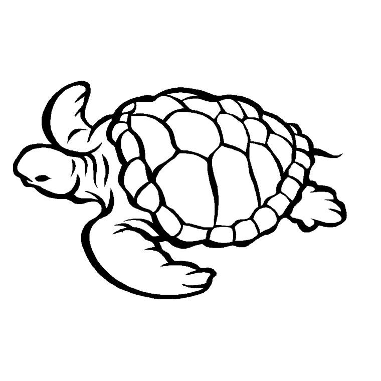 20 dessins de coloriage tortue imprimer imprimer - Dessiner une marmotte ...