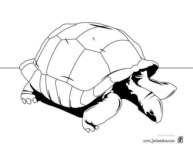 20 dessins de coloriage tortue de terre imprimer - Dessin d une tortue ...