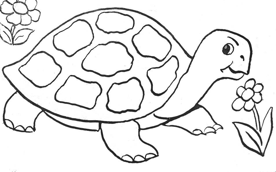 tortue benjamin dessin � colorier