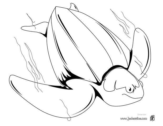 Coloriage dessiner tortue ninja hugo l 39 escargot - Dessin anime des tortues ninja ...