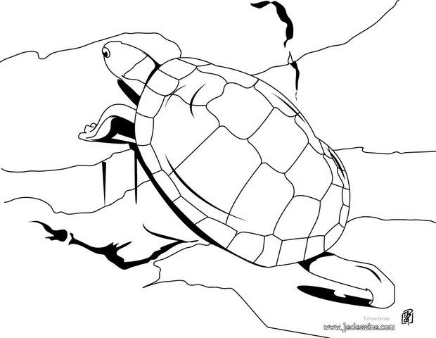 Dessin tortue hugo l 39 escargot - Tortue en dessin ...
