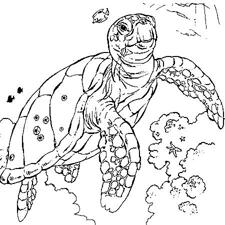 Dessin d 39 une tortue de mer - Tortue a colorier ...