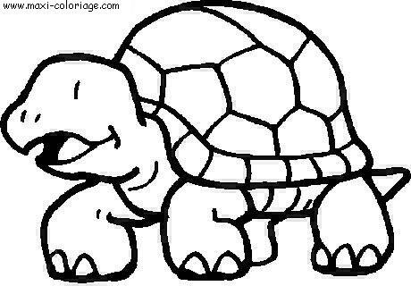 coloriage tortue et lapin