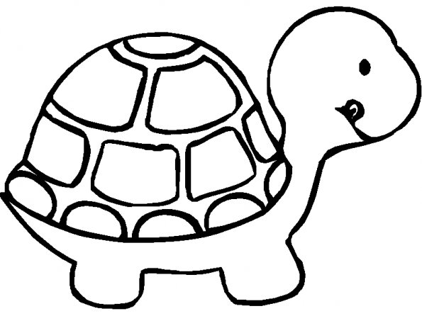 Dessin Simple Tortue
