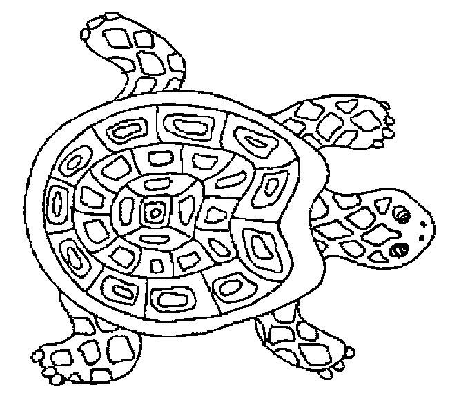 coloriage d une tortue de mer