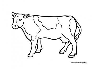Coloriage à Dessiner Vache Veau Taureau