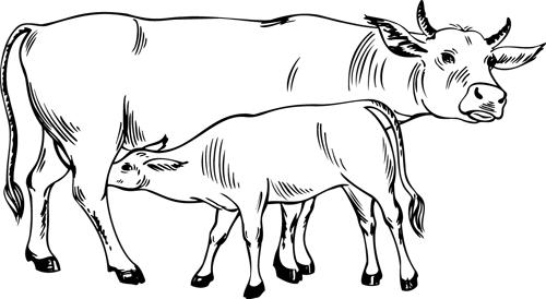 dessin à colorier vache avec veau