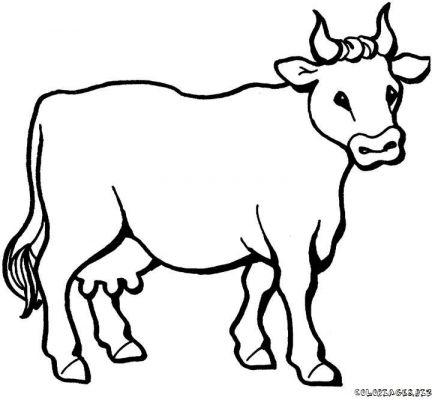 Coloriage A Dessiner Vache Veau Taureau
