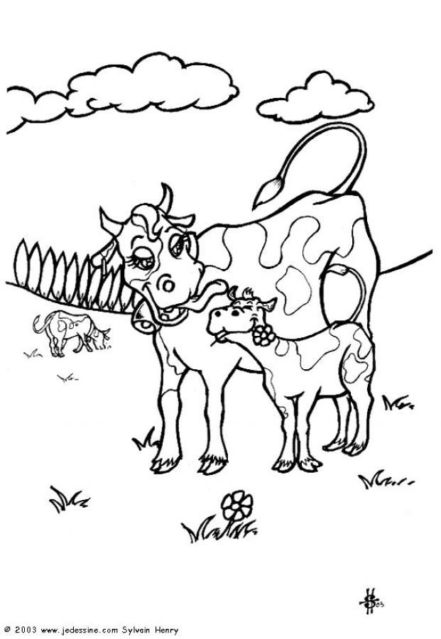 Dessin colorier vache mouton - Vache normande dessin ...