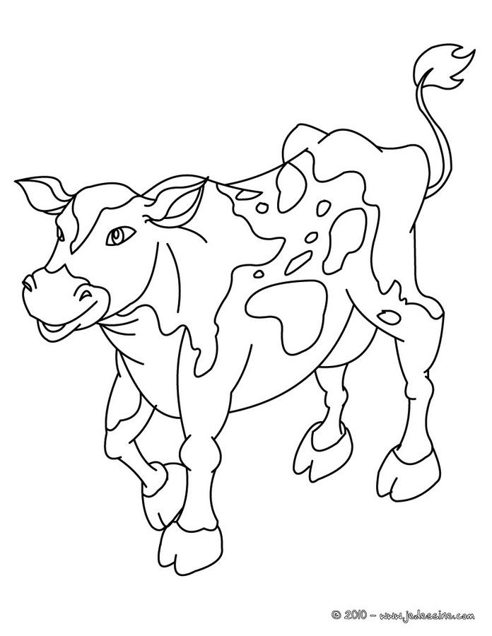 coloriage à dessiner de vache salers