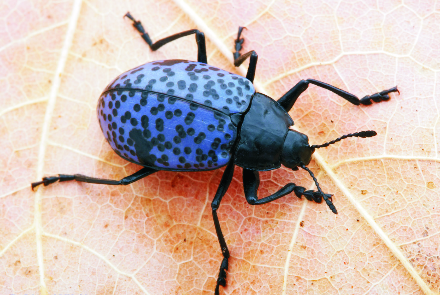107 dessins de coloriage wallpaper insecte imprimer. Black Bedroom Furniture Sets. Home Design Ideas