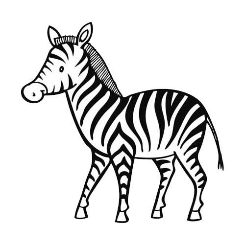 dessin à colorier bébé zèbre
