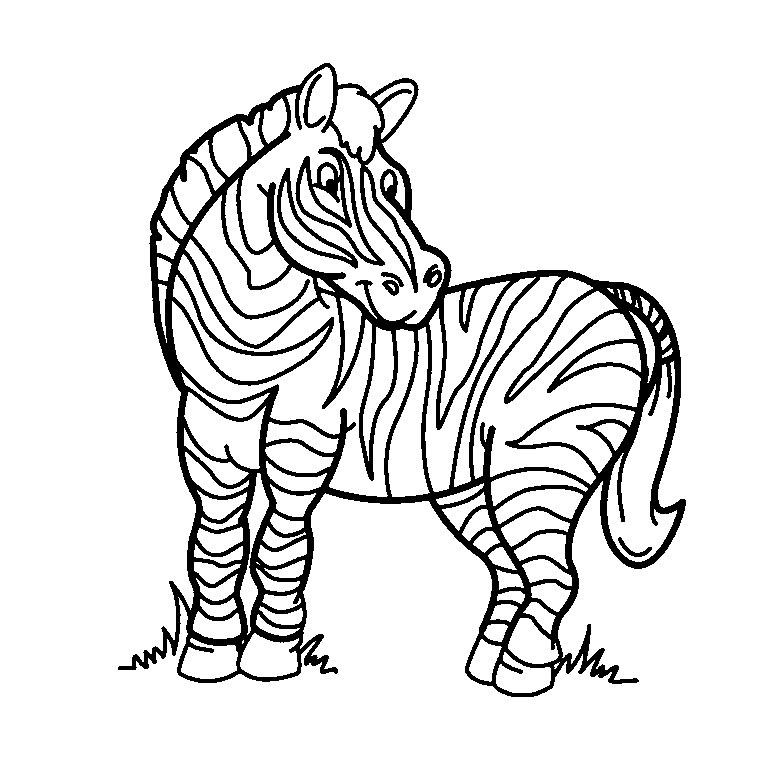 coloriage zou le zebre a imprimer