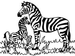 Imprimer Coloriage Zebre