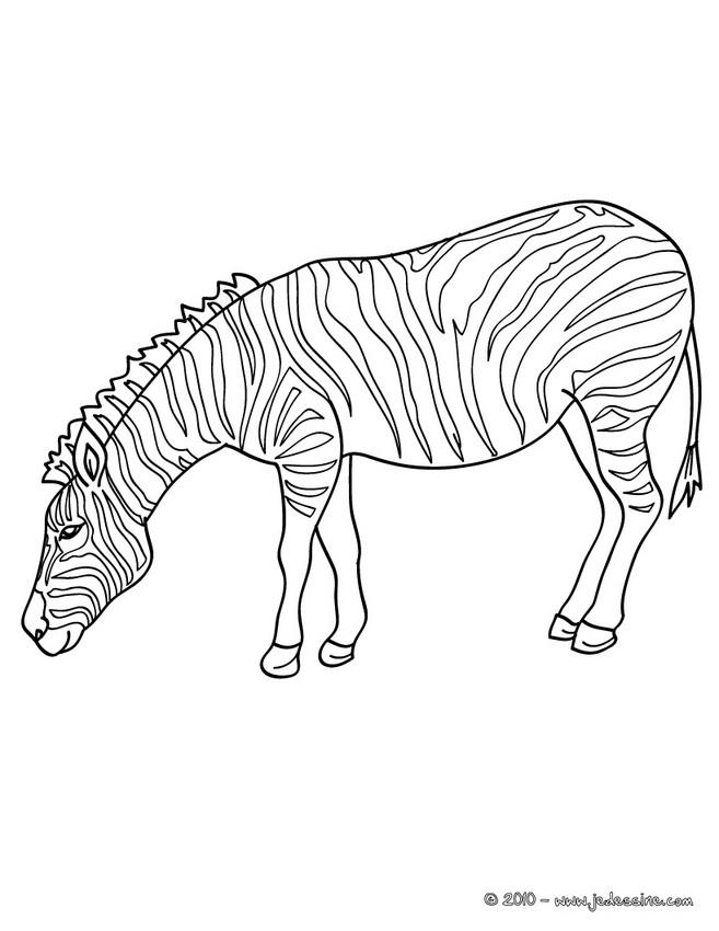 dessin à colorier zebre à imprimer