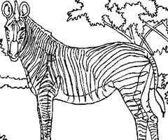 dessin à colorier de zebre gratuit