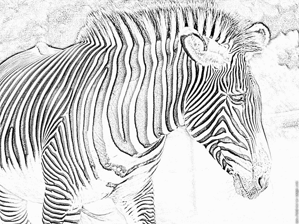 Coloriage zebre vasarely - Zebre a dessiner ...