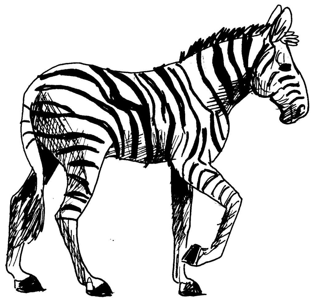 dessin à colorier zou zebre