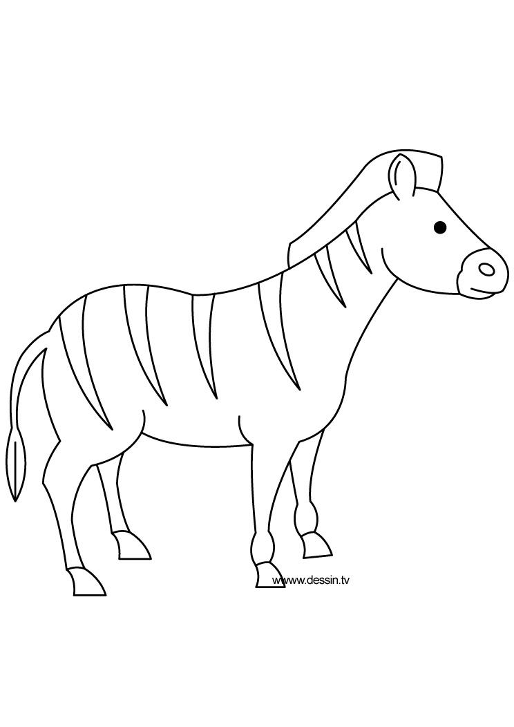 dessin zebre dessin à colorier gratuit