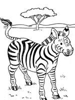dessin à colorier zebre a imprimer gratuit